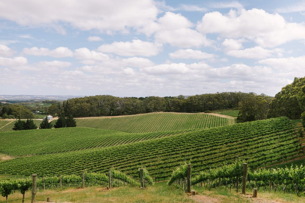 View over the piccadilly valley from the cellar door at Pike and Joyce in the Adelaide hills